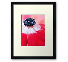 Red Anemone....(II) Framed Print