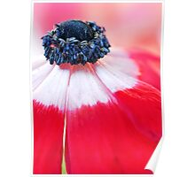 Red Anemone....(II) Poster