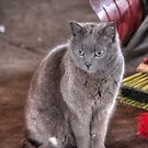 Grey Cat in Warehouse by greg1701