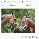 HORSE CODE  by Colleen2012
