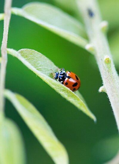 Spots In The Green by Josie Eldred