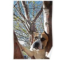 Treed Poster