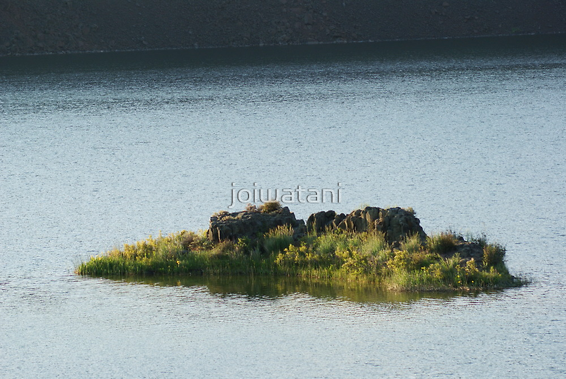 Coulee Lake Little Island of Flowers by joiwatani