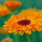 Orange Floral by cshphotos