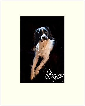 Benson  by Paul Morris