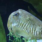 cattle fish by sanngat