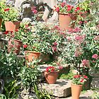 Flowers in pots by Maxine Collins