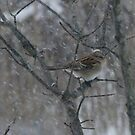 Song Sparrow Eating Seeds In The Falling Snow by Tracy Faught