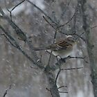 Song Sparrow Eating Seeds In The Falling Snow by Tracy Wazny