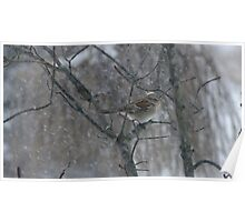 Song Sparrow Eating Seeds In The Falling Snow Poster