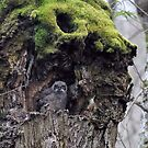 Baby Horned Owl by Heather Haderly