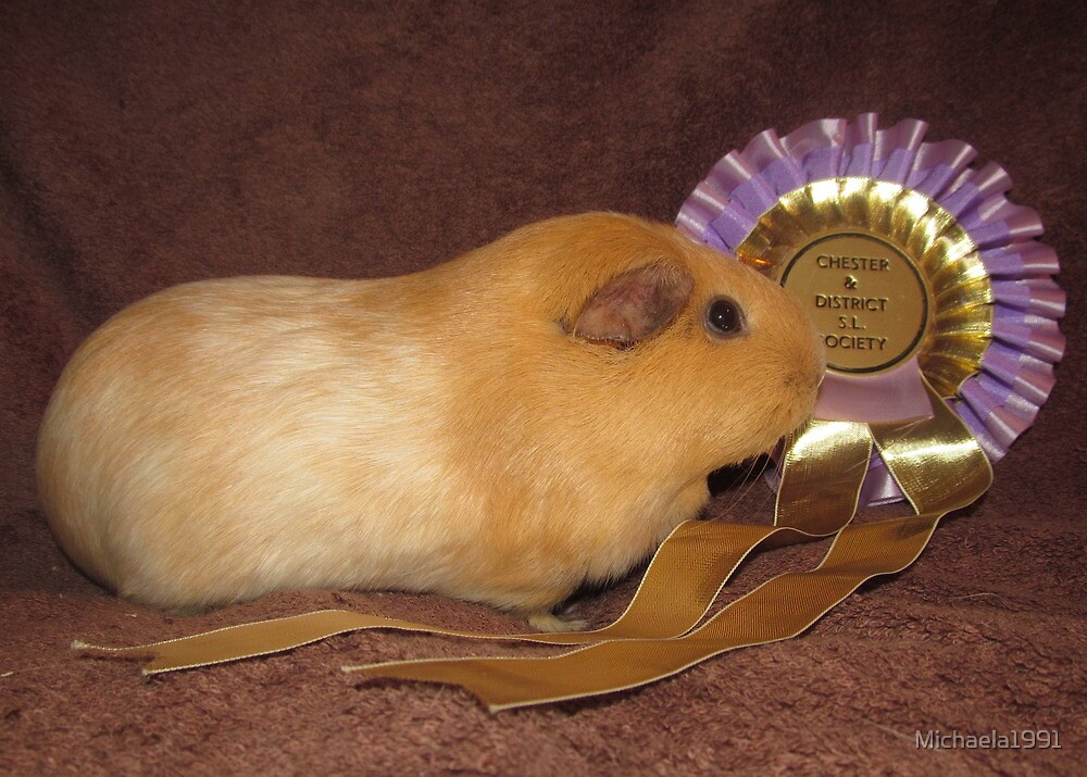 Honey - Best Pet Guinea Pig by Michaela1991