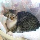 Taffy's Laundry Basket Bed by Vivian Eagleson