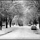 Everything is pretty when covered by snow © by Dawn Becker