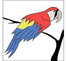 parrot Photographic Print