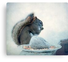 Little Squirrel's Breakfast ~ Canvas Print