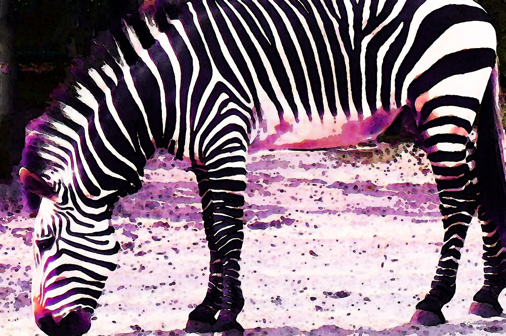 Colorful Zebra 2 - Buy Black And White Stripes Art by Sharon Cummings