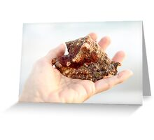 florida conch Greeting Card