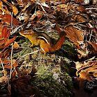 """""""Electric  Chipmunk"""" by Melinda Stewart Page"""