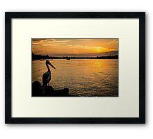 Pelican Sunset On Hastings Framed Print