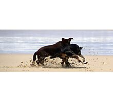 frisby rumble  Photographic Print