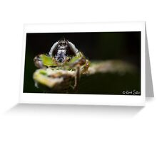 (Mopsus mormon male) Jumping Spider #3 Greeting Card