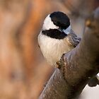 The Carolina Chickadee by Tom Baker