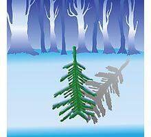 green fir Photographic Print