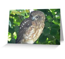 Thinking of You Owl Greeting Card