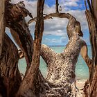 Ahoy ... by Gary  Davey (Jordy)