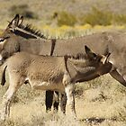 Wild Donkeys Red Rock Canyon- NV by WesternArt