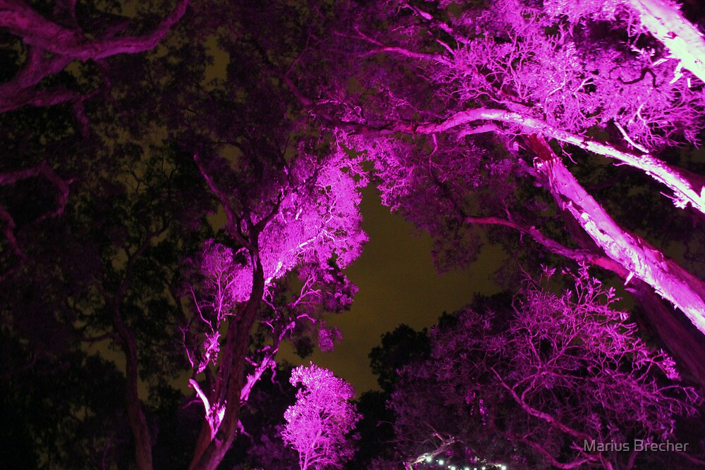 Tree Lights by Marius Brecher