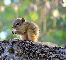 Tree squirrel by Elizabeth Kendall