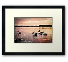 Pelicans On Hastings River Framed Print