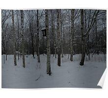 Birches. Poster