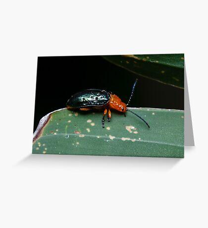 Orange-blue Narrow-necked Leaf Beetle - Criocerinae lema Greeting Card
