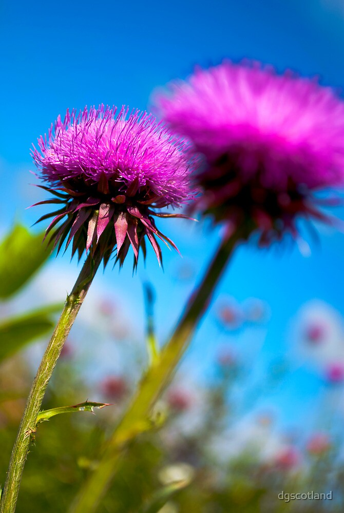 Prickly Pair by dgscotland