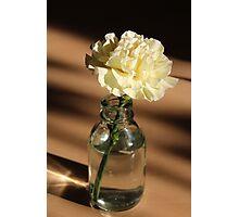 Carnation - Still Life Photographic Print