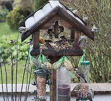 A few of our feathered friends by missmoneypenny