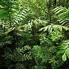 Heart of the Rain Forest (Costa Rica) by Matt Tilghman