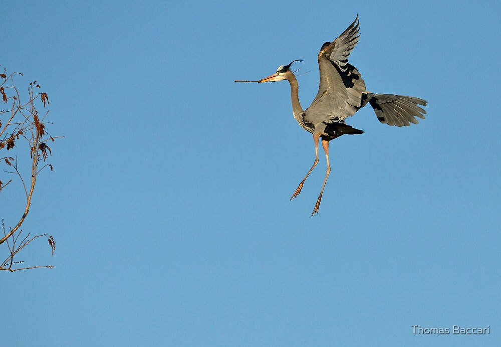 Flying To The Nest by TJ Baccari Photography