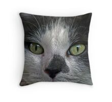 Close Up Of Patience The Cat Throw Pillow