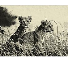 The pride  Hand Drawing Photographic Print