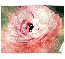 Pink Ranunculus Water Color Poster