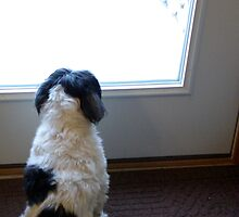 BOGIE WATCHING THE SNOW by jclegge