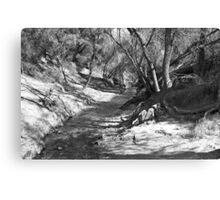 Black and White Park Canvas Print