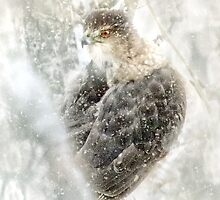 Hawk Eye by Barbara Zuzevich
