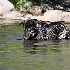 Sophie in the Truckee River by Anthony & Nancy  Leake