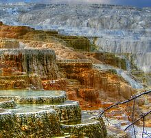 Canary Springs Terraces by JamesA1
