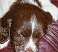 "Martha at 7 weeks ""asleep for a change"" by Paul Morris"